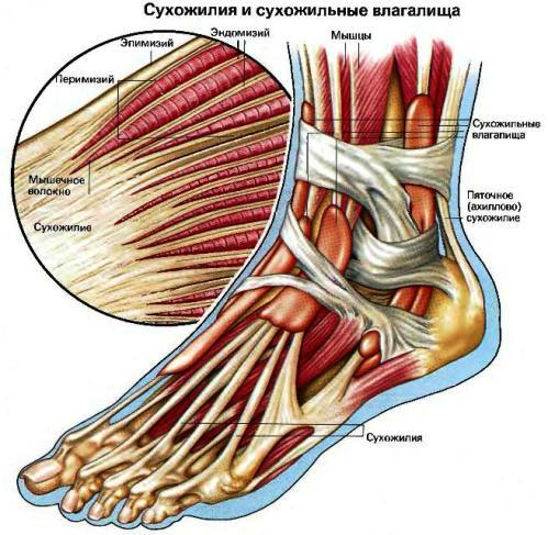 Гематома бедренной артерии лечение