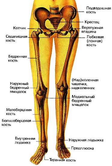это больберцовой кости внизу ноги Скорпионшам